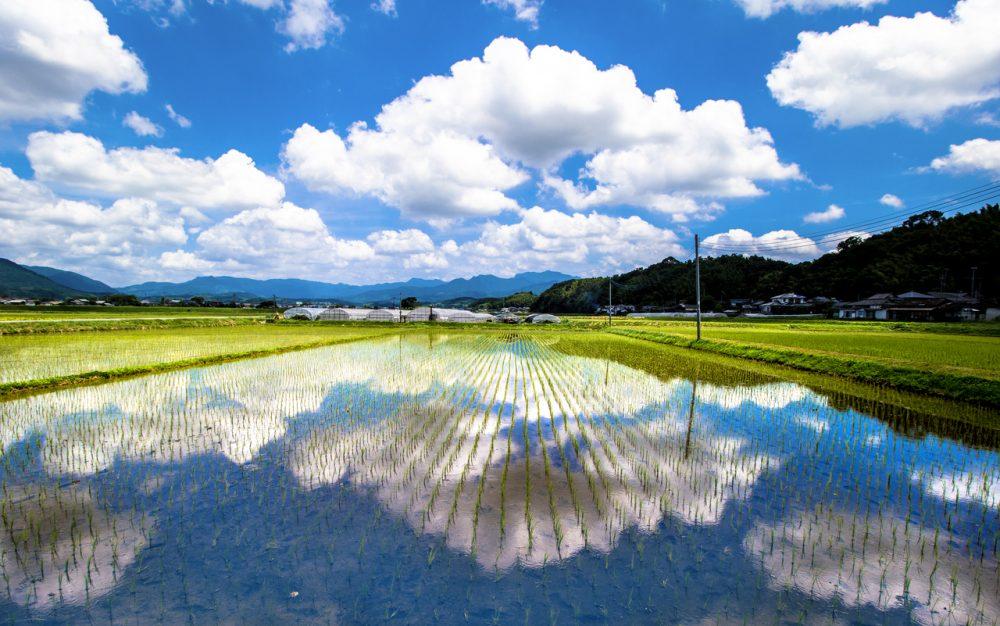 熊本、水田
