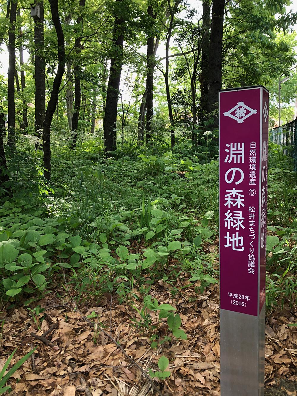 淵の森緑地(きびる旅)